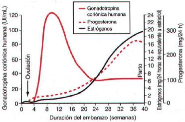 hormonas en el embarazo